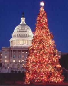 Capitol Christmas Tree Photo @Architect of the Capitol